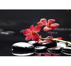 Фототапет Червена орхидея