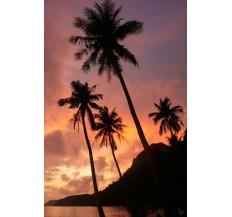 Фототапет Палми на залез слънце